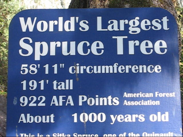 home of the world s largest spruce tree